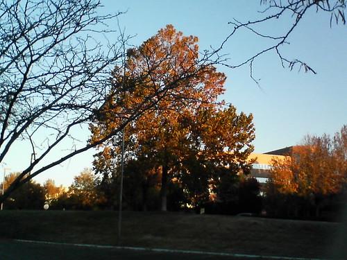 albuquerque tree