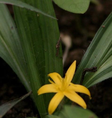 IMG_0200 Wildflower