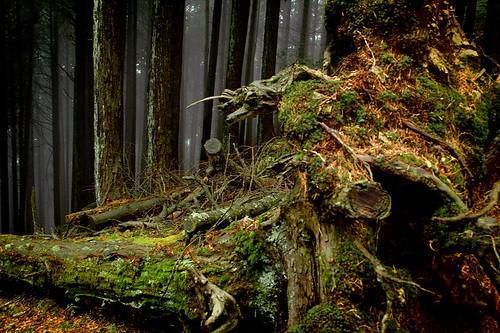 Okutama Forest