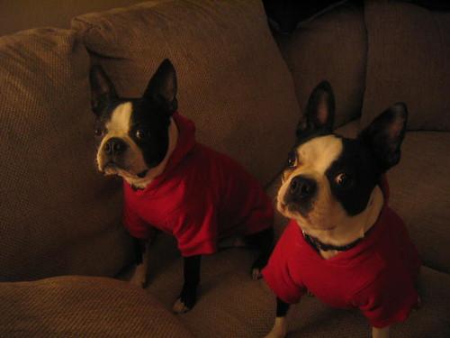 hoodie dogs