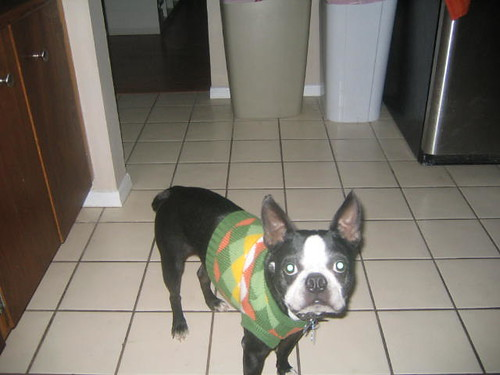 Joey in his sweater