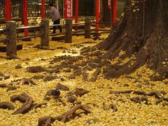 鬼子母神〜護国寺20061203 036