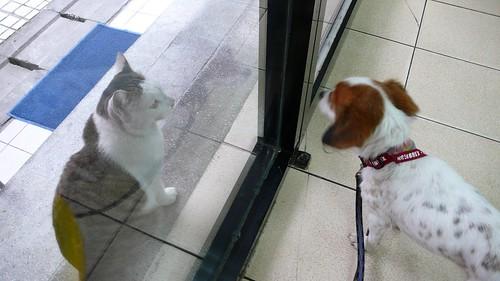 你想進來,我想出去 You wanna in, I wanna go (by tenz1225)