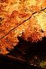 シリーズ「紅葉」-第3夜-闇夜の色彩