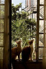 cats pose photo by davidclifford