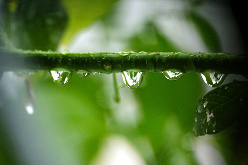 Water Drop (by Audiofan)