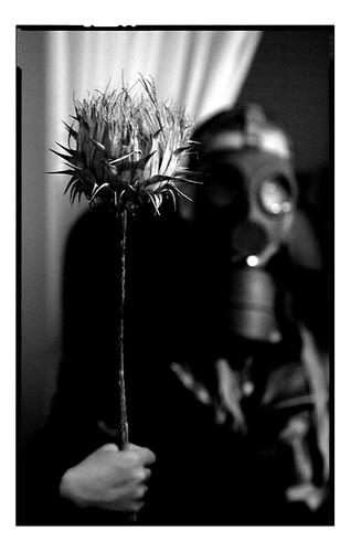Bloom by Armindo Dias