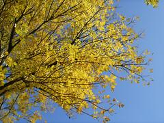 Herbstimpressionen3