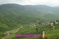 Cameron Bharat Plantations