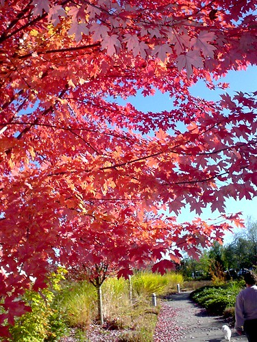 Anatomy of a Walk: red tree