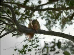 squirrel, cute, nationwide insurance, tv ads, tv commercial