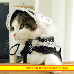 disfraz gato carnaval 2006020514_1348241567