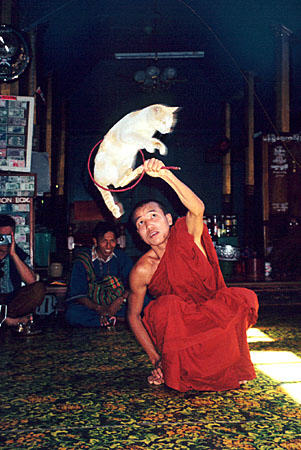 a-monk-holds-a-hoop-while-a-cat-jumps-through-at-nga-phe-kyaung-commonly-known-as-the-jumping-cat-monastery-mya038