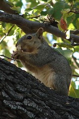 Snacking In The Tree