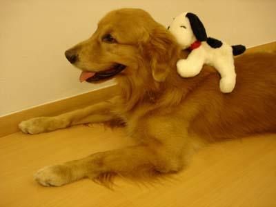 Tommy - Snoopy