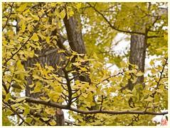 Leaves 061116 #01