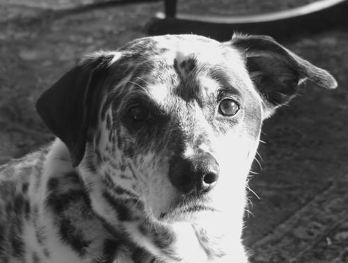 Chiaroscuro Dog