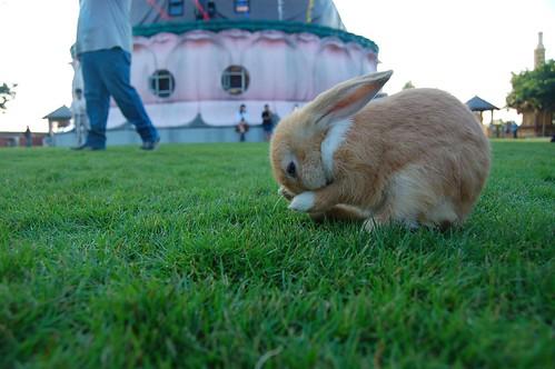 小兔(白)4