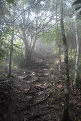 Steamy Jungle Trail