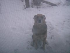 Majc in snow