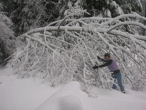 Alder goes over in snow