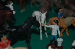 Girl feeding horses
