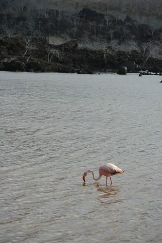Pink Flamingo Lagoon