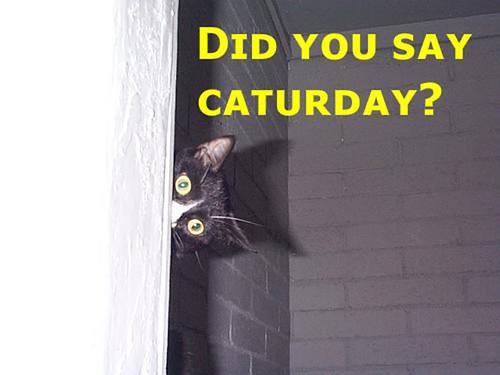 Happy Caturday Everyone!