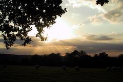 Ashdown Sunset