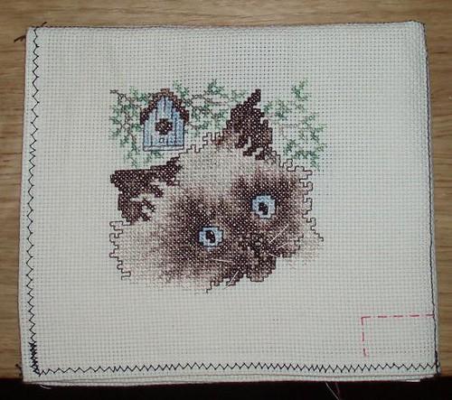 kissapistely