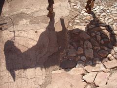 La sombra del equino