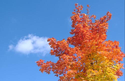 Multicoloured tree