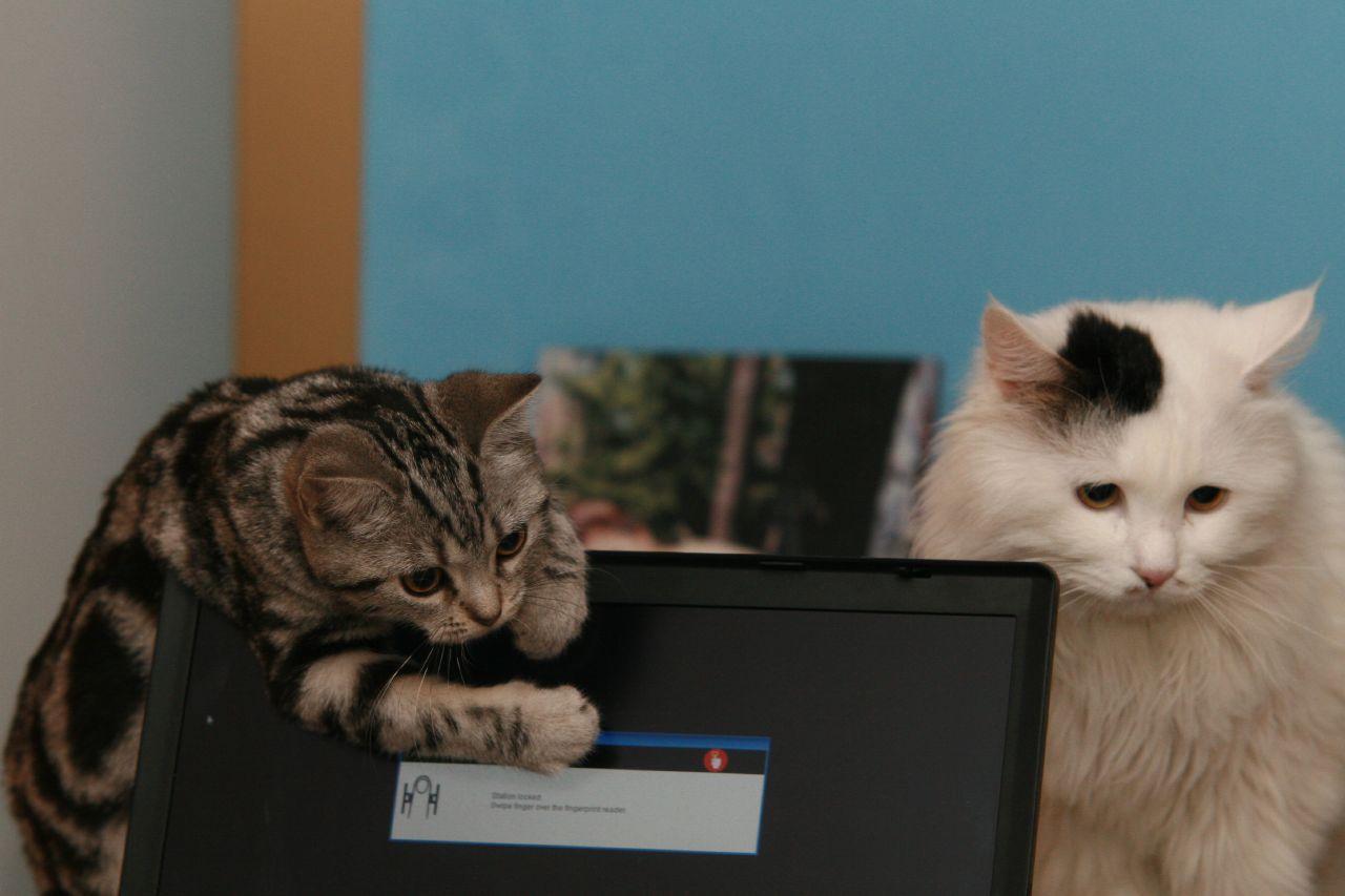 你家的猫会不会吃奇怪的东西?