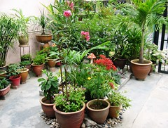 Our frontyard garden