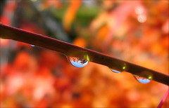droplets of reflection