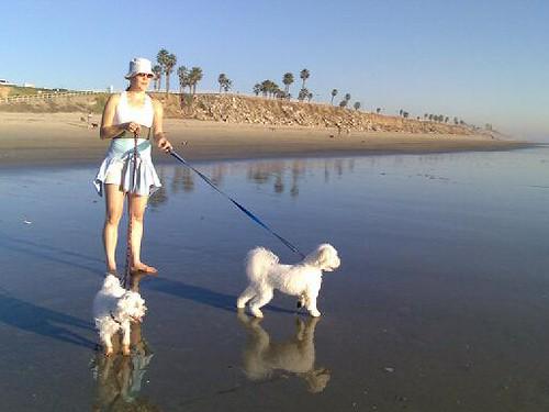 At Dog Beach