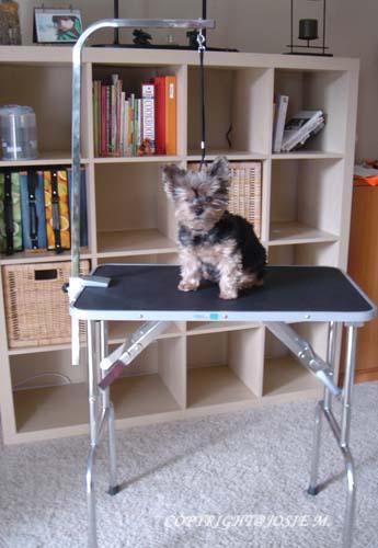 grooming table