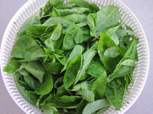 Bowl of washed basil