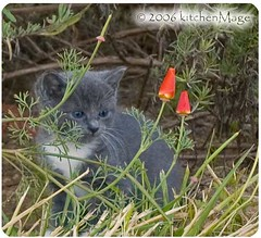 trubble in the poppies