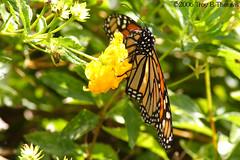 20061123_Butterfly