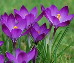 Blumen photo by Ronile35