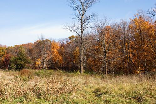 Morton Arboretum-17