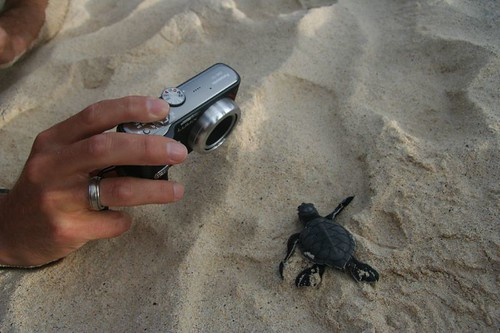 Baby Turtle Photo Shoot