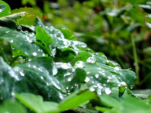 Great Rain