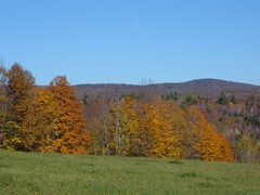 Vermont Fall Field
