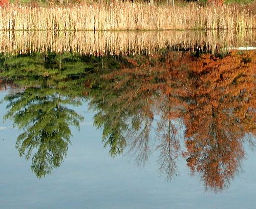 upsidedown trees