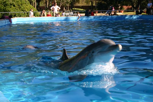 Sea World Dolphin