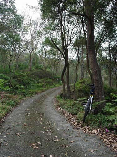 美麗的林道