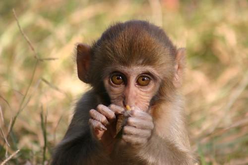 Baby monkey...