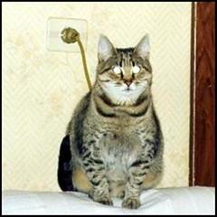 lampcat